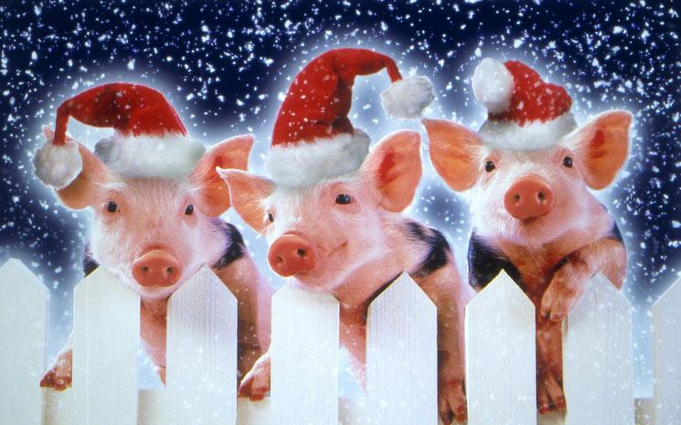 http://biopsy.files.wordpress.com/2008/12/three-little-pigs.jpg